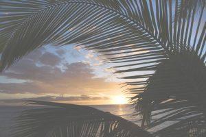 kihei-sunset-thru-palms