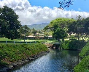 Maui Eldorado from River